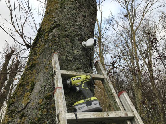netgear-arlo-dans-un-arbre